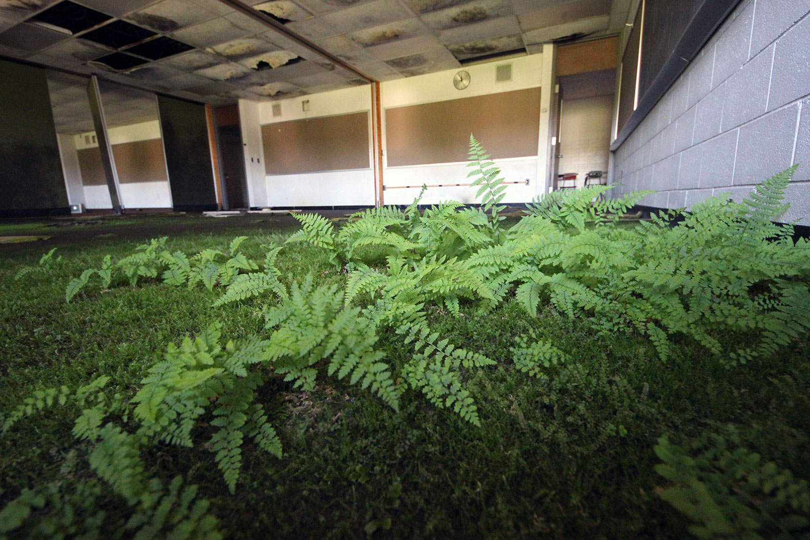 Ferns on the Floor in an Abandoned School by Courtney Celley