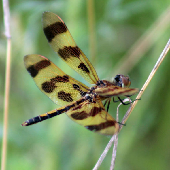 Halloween Pennant by Courtney Celley