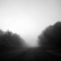 Foggy Morning by Courtney Celley