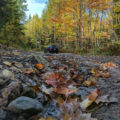 Fall Colors in Superior National Forest by Courtney Celley